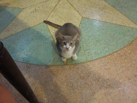 10_katt.jpg