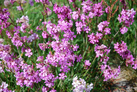 10_violett.jpg