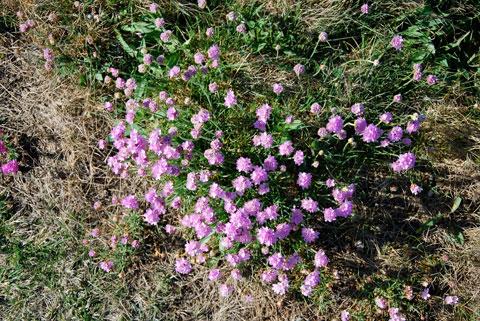 12_blommor.jpg