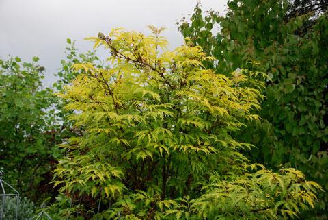 12_gulbladigflader09.jpg