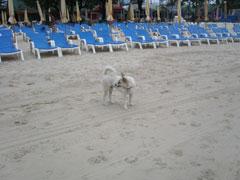 13_hund2.jpg