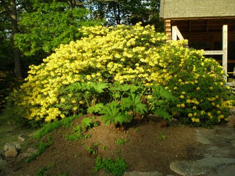 16_blommandebuske2.jpg