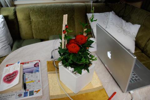 1_blomma.jpg