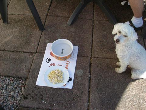 1_hundfrukost.jpg