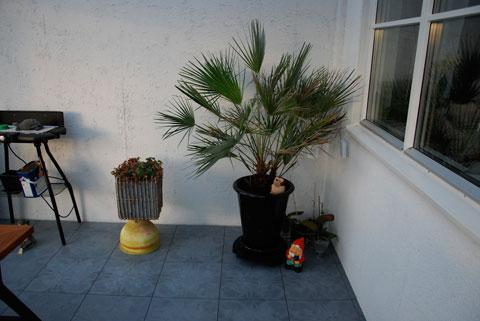 1_palmen.jpg