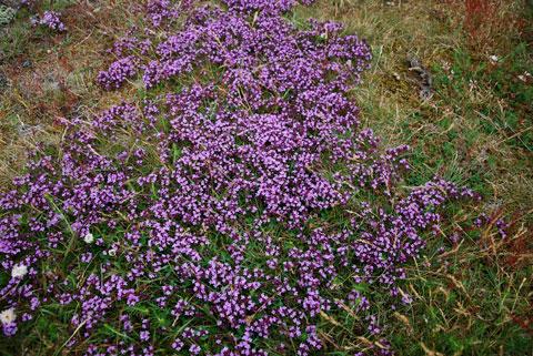1_violett.jpg