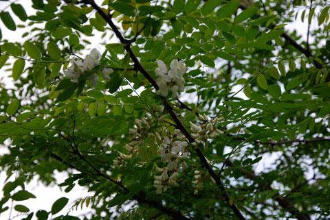 2_blommandebuske1.jpg