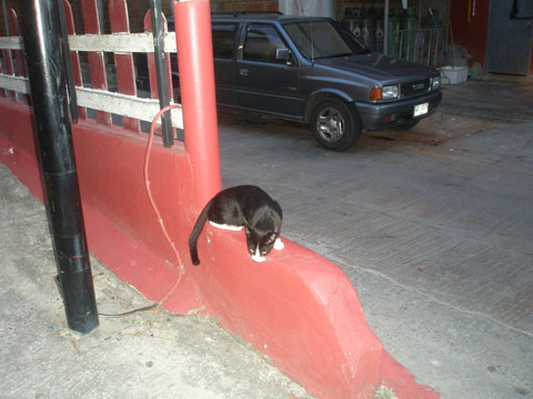 3_katt1.jpg