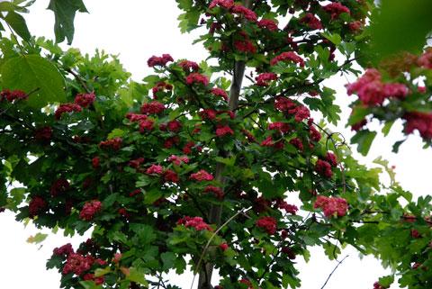 3_rosenhagtornet.jpg