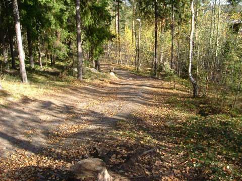 3_skogen.jpg