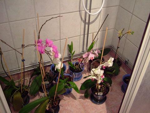 4_blommor.jpg
