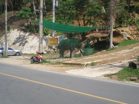 4_elefantpavaghem.jpg