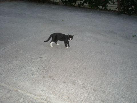 4_katt2.jpg