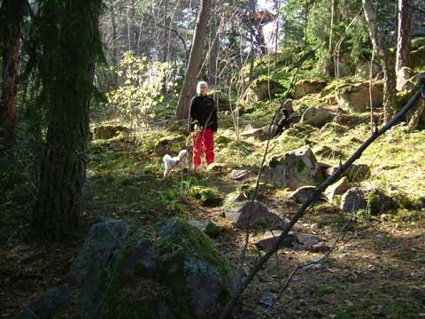 4_solskog.jpg