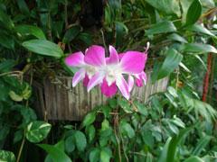 5_blomma1.jpg