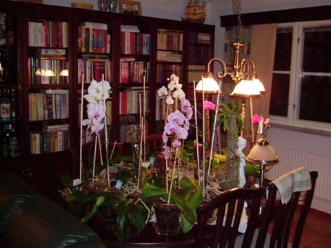 5_orchideer.jpg