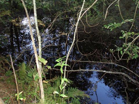 6_vattensblank.jpg