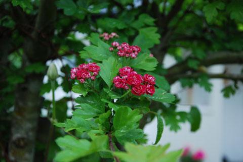 9_rosenhagen.jpg