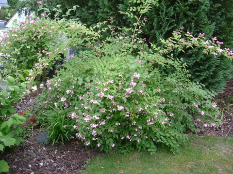 2_paradisbusken.jpg